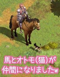 馬と猫が仲間に
